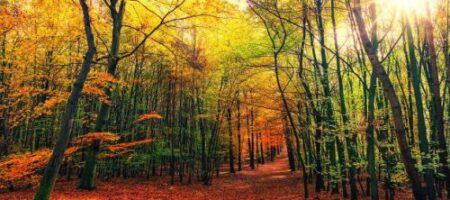 Зима рядышком: синоптики напугали прогнозом на ноябрь