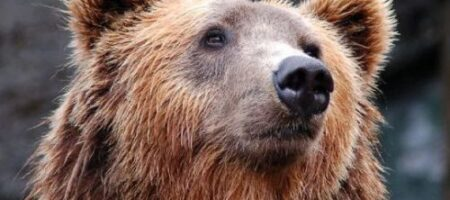 В российском зоопарке медведь набросился на женщину: это попало на ВИДЕО