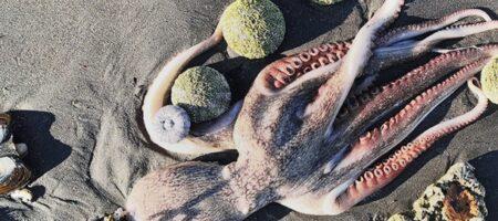 Убийство Тихого океана. Что произошло на Камчатке? СЮЖЕТ