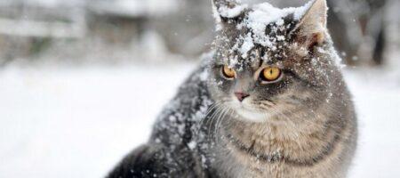 Накроют морозы, потом зальет дождем: подробный прогноз погоды зимой