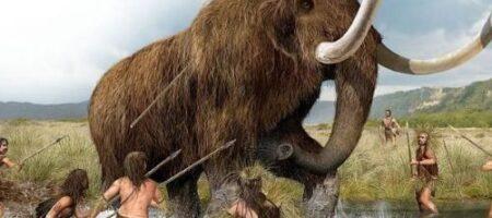 Ученые из США раскрыли загадку вымирания мамонтов