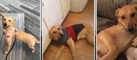 Бездомная собака из Запорожья стала суперзвездой модного глянца (ВИДЕО)