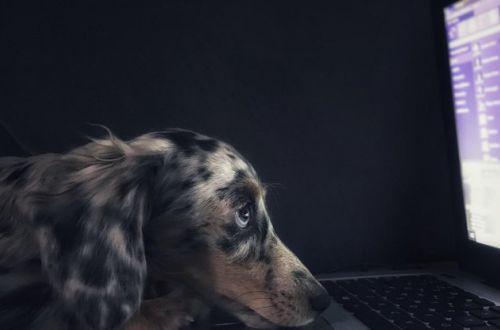 Ученые выяснили, что видят в телевизоре собаки и кошки