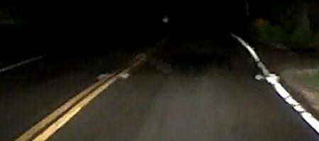 """Водитель едва не сбил """"нечто"""" на трасе: запись с регистратора шокировала его"""