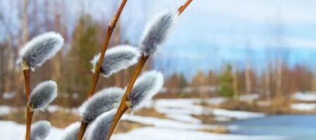 Какой будет весна в Украине: появился прогноз на март