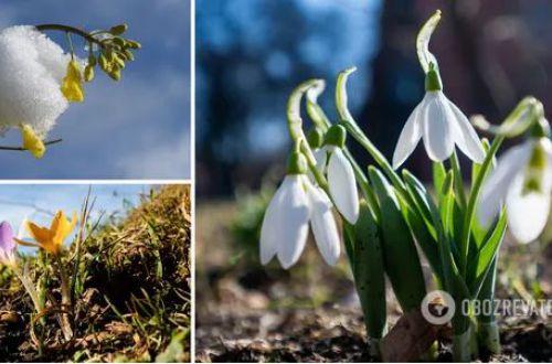 Украинцам рассказали, какой будет погода на 8 марта