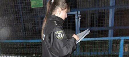 Тигр загрыз сотрудника зоопарка в Черниговской области