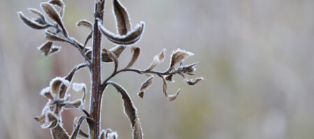 До -13: синоптик предупредила о мартовских морозах