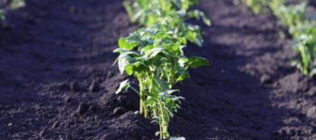 Посевной календарь на апрель: когда нельзя сеять и сажать