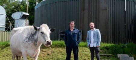 Коровы помогли фермеру майнить криптовалюту
