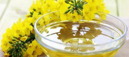 Украина установила рекорд по объемам экспортирта рапсового масла