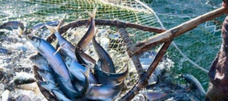 Украина продолжает согласовывать с агрессором квоты на вылов рыбы в Азовском море