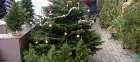 Елка в подарок: предприниматель в Днепре устроил новогоднюю благотворительную акцию. ВИДЕО