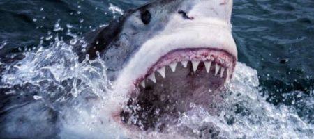 Опасную акулу женщина отогнала голыми руками. ВИДЕО