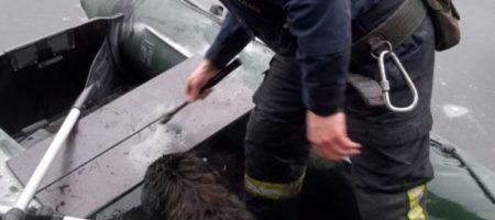 Под Киевом бездомный пес ушел под лед: трогательное ВИДЕО спасения собаки