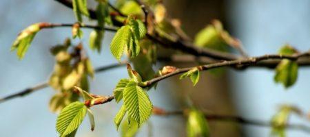 Весной ждем аномалию: синоптик пугает и делает важное предупреждение
