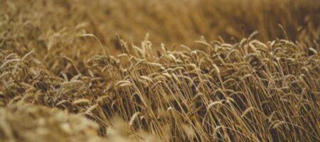 Экспорт зерна из Украины побил очередной рекорд
