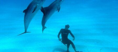 Под Одессой турист едва не погиб из-за стаи дельфинов