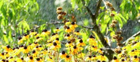 Дожди ненадолго: названа дата, когда в Украину вернется жара