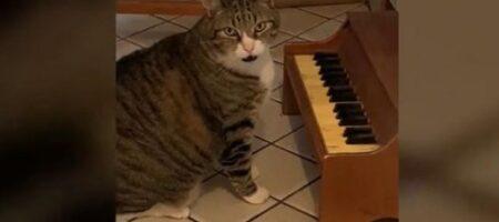 Этот кот играет на пианино, когда ему хочется есть (ВИДЕО)