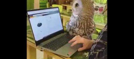 Сеть покорила сова с кошачьими повадками (ВИДЕО)