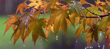 В Украину идут дожди: прогноз погоды на 29 и 30 сентября от Натальи Диденко