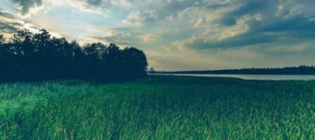 Новый хит Twitter: собака, позеленевшая от травы