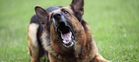 Почему собака лает на одних людей, а других не трогает