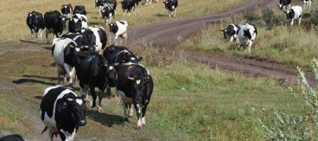Украинцам хотят позволить варить самогон лишь при наличии коровы