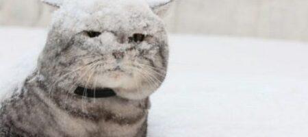 Какой будет зима 2020-21 в Украине: климатолог дала тревожный прогноз
