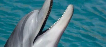 Американцы создали уникального робота-дельфина (ВИДЕО)
