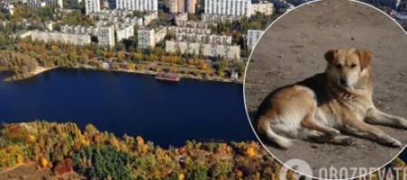 Собачатина на обед: в Киеве живодеры устроили охоту на собак (ВИДЕО)