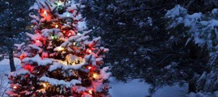 Ожидается снег с дождем: народный синоптик о погоде на Новый год 2021