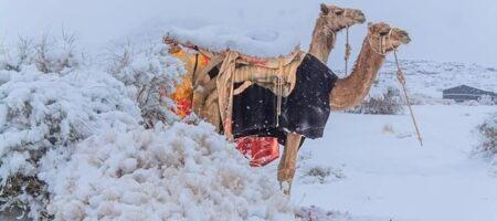 Невероятно но факт: Сахару засыпало снегом (шокирующие кадры)