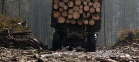 СМИ показали видео массовой вырубки лесов на Волыни