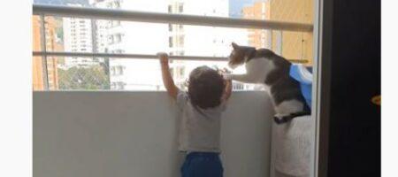 Ребенок вышел на балкон: вот как няня-кошка уберегла от опасности (ВИДЕО)