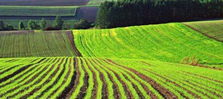 Рынок земли заработал в Украине — мораторий отменен