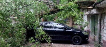 Как получить компенсацию, если на авто упало дерево